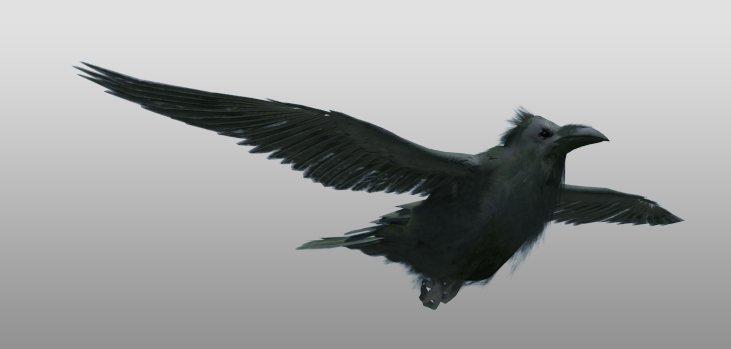 Raven 3D Model in Bird 3DExport