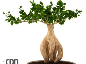 Potted Plant01
