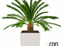 Potted Plant02