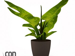 Potted Plant11