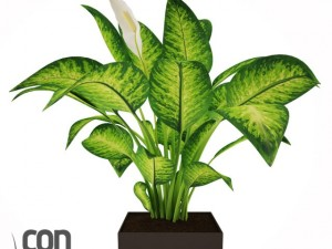 Potted Plant12