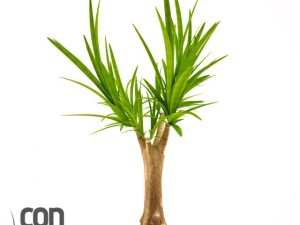 Potted Plant19