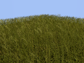 Tall Grass Tile