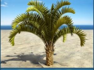 Palm  8