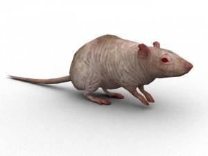 Rat Rigged