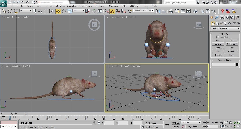 Rat Rigged 3D Model in Rodent 3DExport
