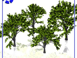 VP Tree Set 1