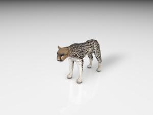 Realistic Cheetah