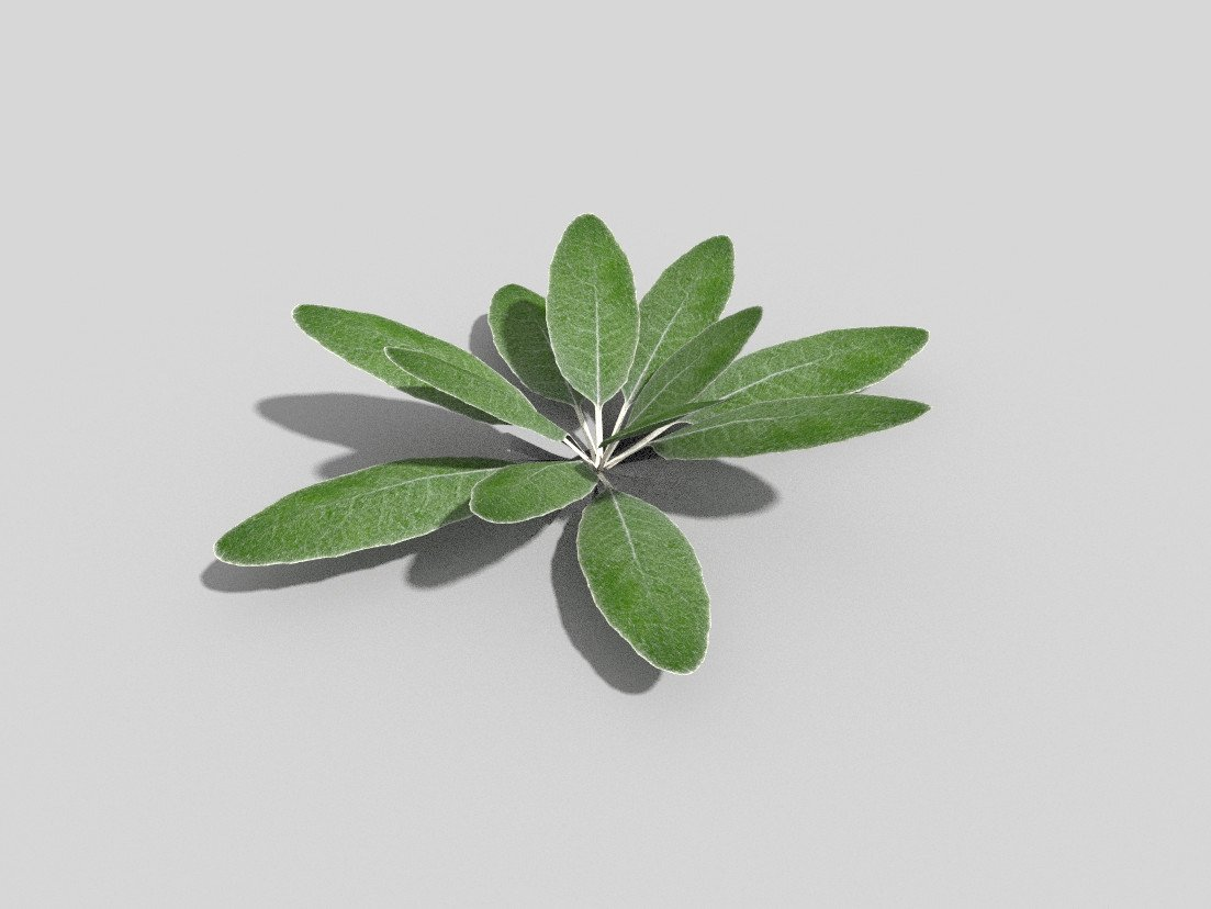 Low poly plant 3D Model in Small Plants 3DExport