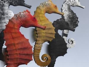 Seahorse Pack