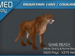 Mountain Lion  Cougar