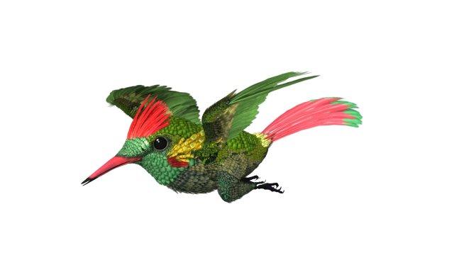 HummingBird 03   3ds max 2010 3D Model