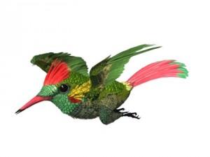 HummingBird 03   3ds max 2010