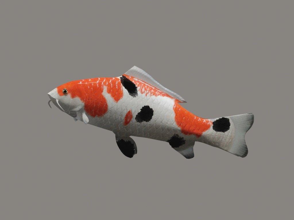 KOI fish 3D Model in Fish 3DExport