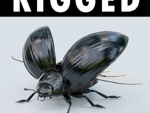 Black Beetle Rigged
