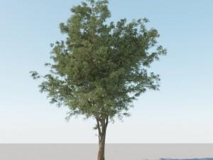 Generic Tree A1