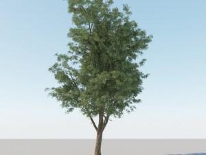 Generic Tree A2