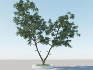 Generic Tree A3