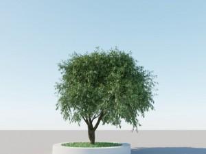 Generic Tree A5