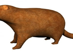 Textured Groundhog
