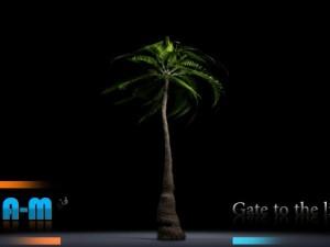 Animation Palm