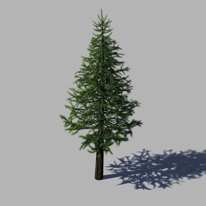 Woods  Fir Tree 01 3D Model