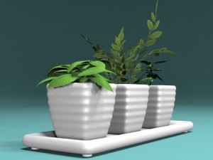 Three bush in pots