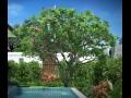 Plumeria frangipani rubra