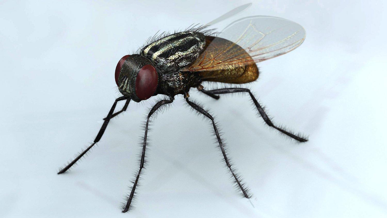 Mosca Modelo 3D in Insectos 3DExport