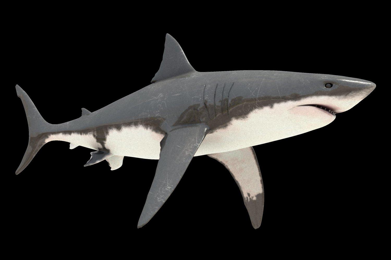 Tiburon Blanco Modelo 3D in Tiburón 3DExport