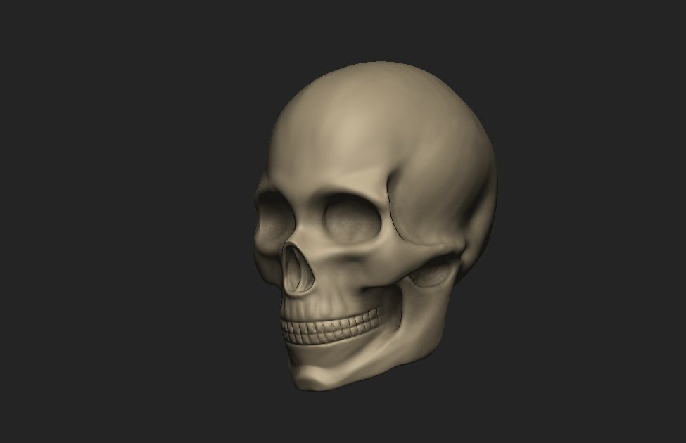 Female Skull 3D Model in Anatomy 3DExport
