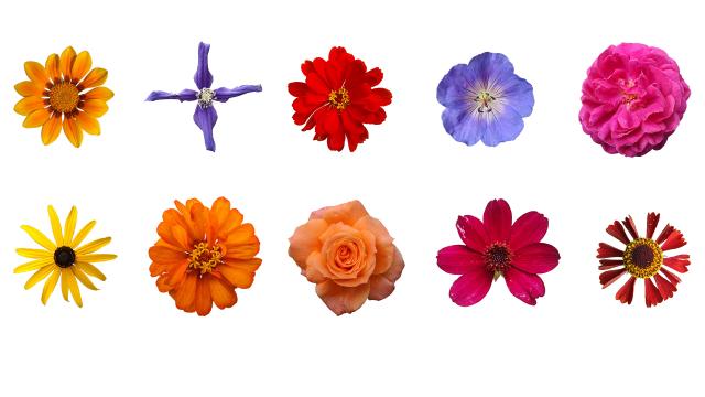 3d модель растение (цветок) 55