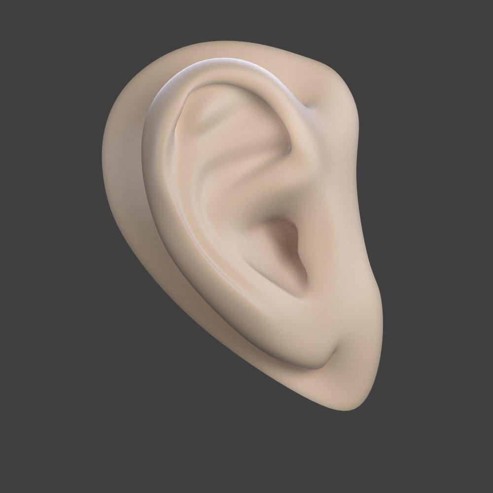 Ear Gratis Modelo 3D in Anatomía 3DExport
