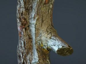 Wood Log 1