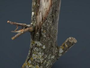 Wood Log 3