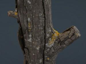 Wood Log 4