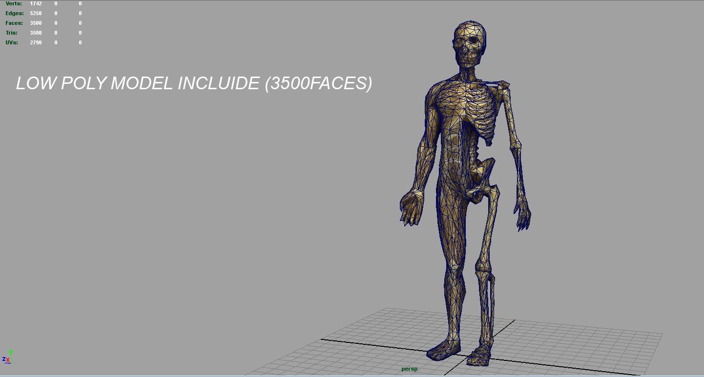 Human Body Anatomy Model 3d Model In Anatomy 3dexport