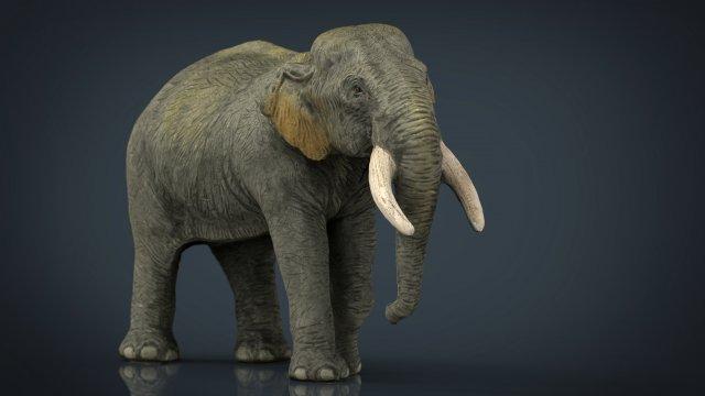 слон модель 3д макс Ивуара редкость длинная