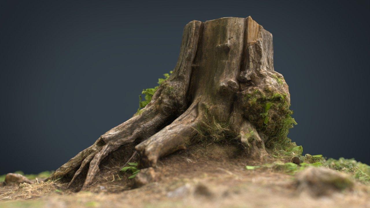 Tree Stump 4 3D Model in Tree 3DExport