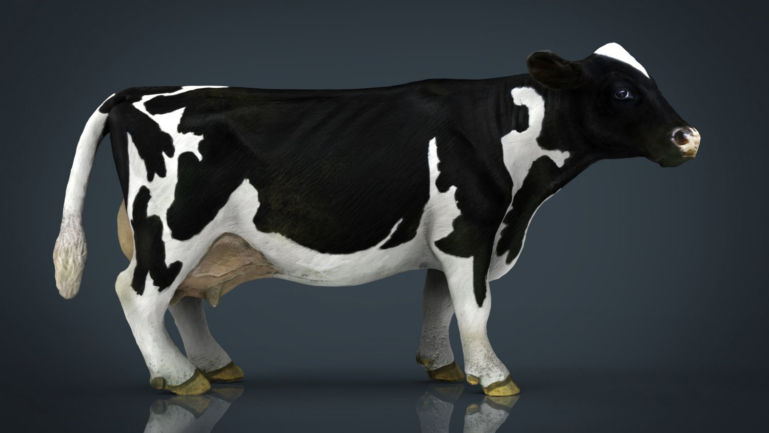 Cow 3D Models - Download Cow 3D Models 3DExport