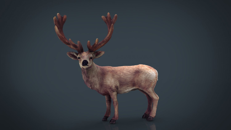 Red Deer 3D Model in Deer 3DExport