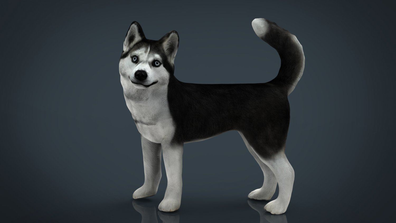 Siberian Husky Modelo 3D in Perros 3DExport