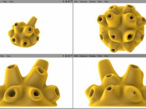 Demospongiae yellow sea sponge
