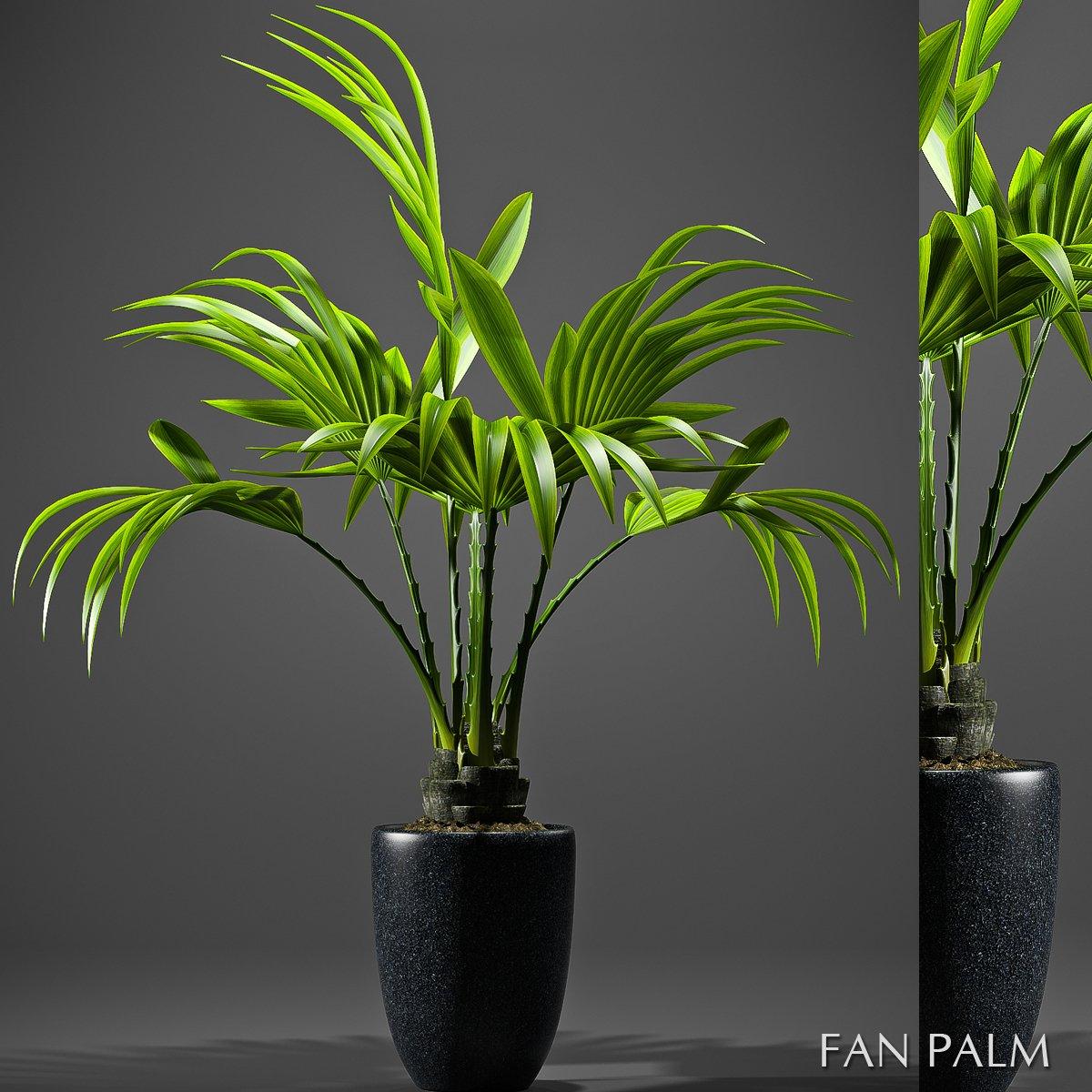 FAN PALM PLANT 3D Model in Small Plants 3DExport