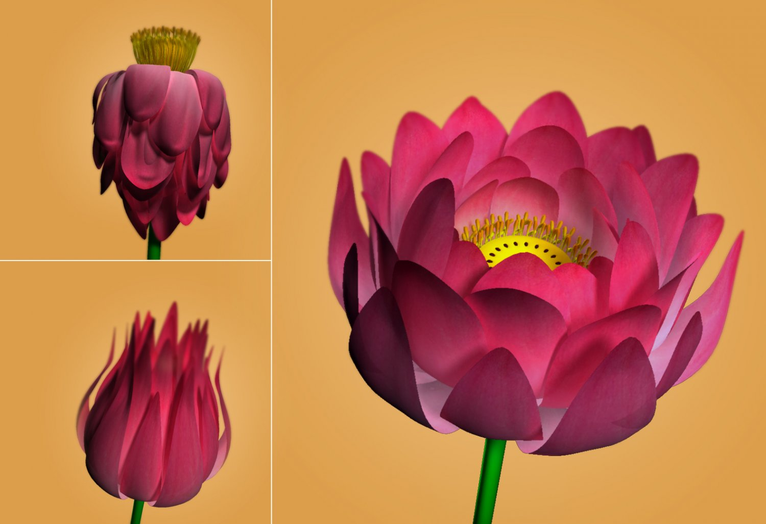 Lotus flower free 3d model in flowers 3dexport mightylinksfo