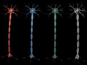 Neuron 4 clolor