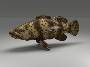 Goliath Fish