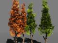 Tree Pack 1BlackGum