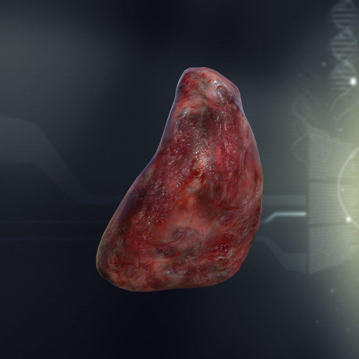 Human Spleen Anatomy 3d Model In Anatomy 3dexport