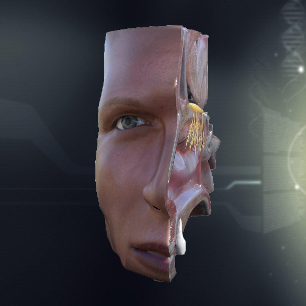 Human Nose Anatomy 3d Model In Anatomy 3dexport